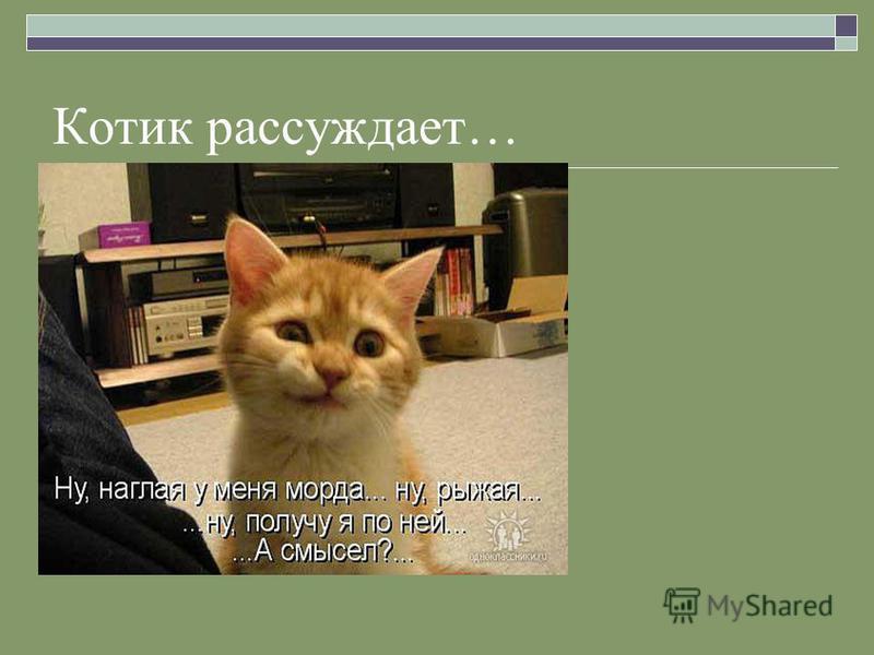 Котик рассуждает…