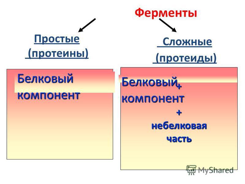 Ферменты Простые (протеины). Сложные (протеиды) Белковыйкомпонент ++не белковая часть Белковыйкомпонент