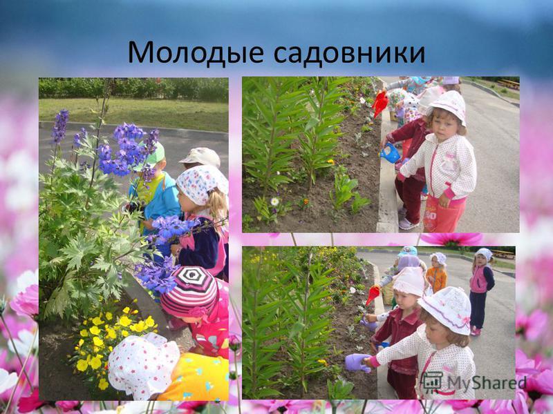 Молодые садовники