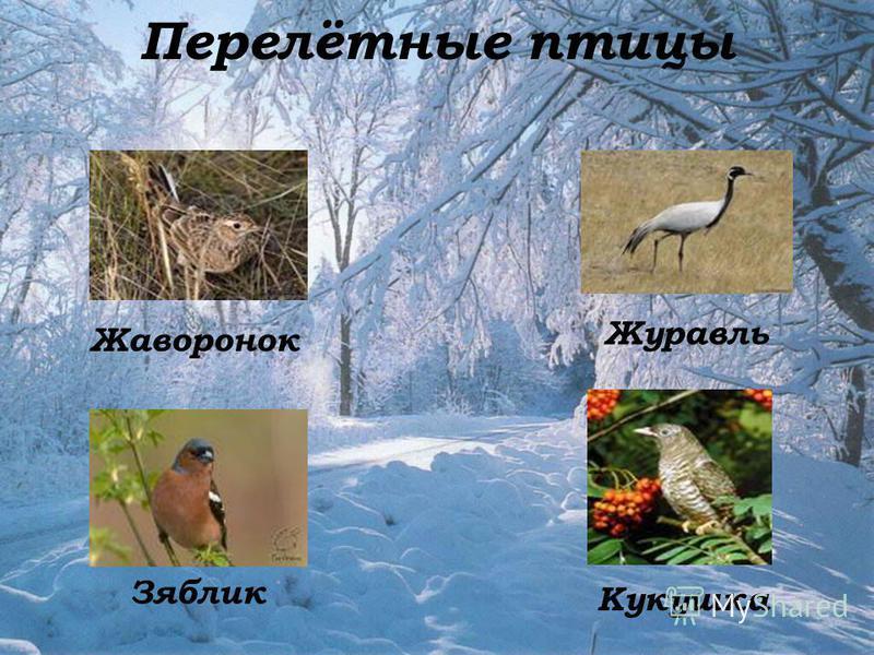 Перелётные птицы Жаворонок Зяблик Журавль Кукушка