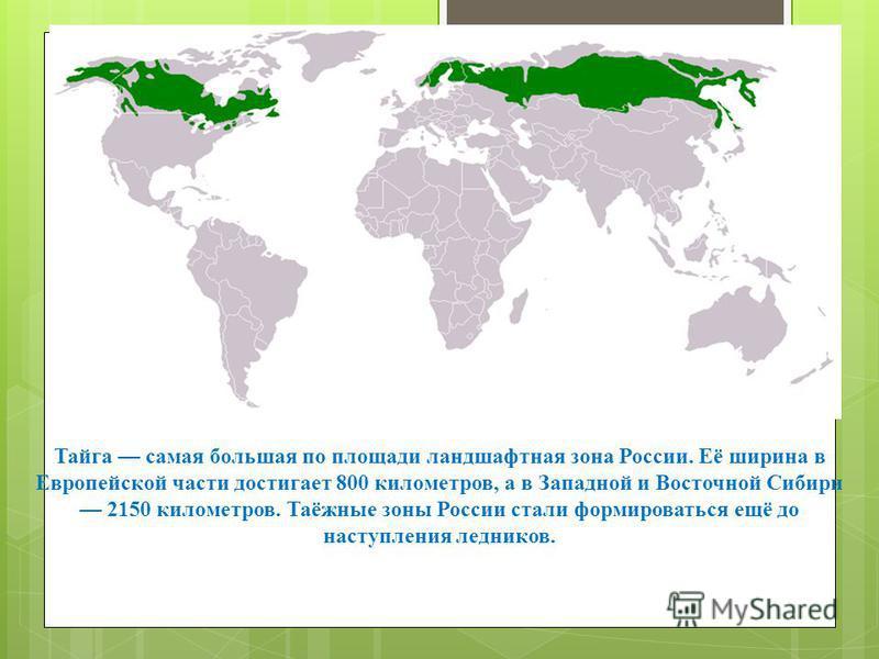 Содержание. Географическое положение. Климат. Почва. Растительный мир. Животный мир. Вывод.
