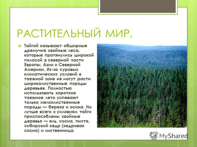 ПОЧВА. Для зоны тайги наиболее типичны подзолистые почвы. Они типичны для С. европейской части России, а также для Сибири, где мерзлоты нет или она лежит глубоко. На песках и щебнистых породах в тайге широко распространены подзолы. Для зоны тайги наи