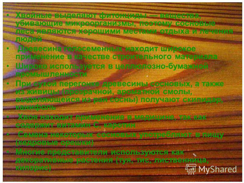 Хвойные выделяют фитонциды вещества, убивающие микроорганизмы, поэтому сосновые леса являются хорошими местами отдыха и лечения людей Древесина голосеменных находит широкое применение в качестве строительного материала Широко используется в целлюлозн