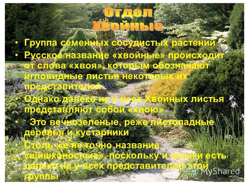Группа семенных сосудистых растений Русское название «хвойные» происходит от слова «хвоя», которым обозначают игловидные листья некоторых их представителей Однако далеко не у всех Хвойных листья представляют собой «хвою» Это вечнозеленые, реже листоп
