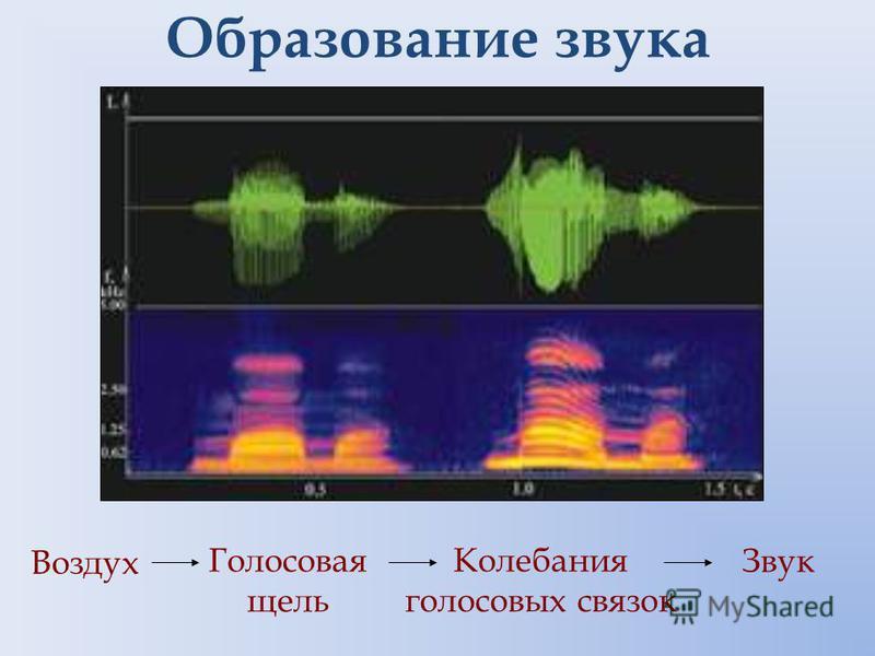 Образование звука Воздух Голосовая щель Колебания голосовых связок Звук