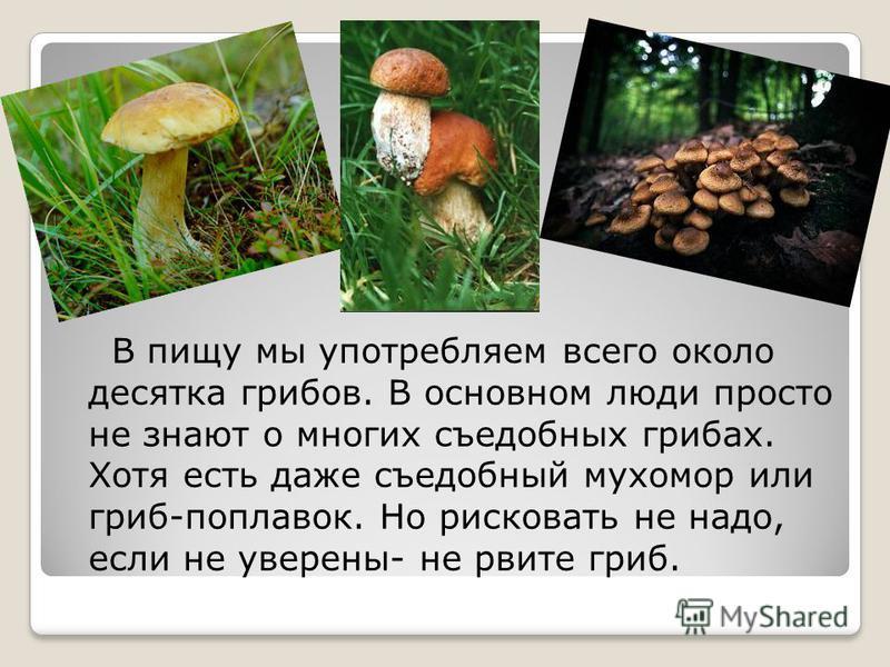 В пищу мы употребляем всего около десятка грибов. В основном люди просто не знают о многих съедобных грибах. Хотя есть даже съедобный мухомор или гриб-поплавок. Но рисковать не надо, если не уверены- не рвите гриб.
