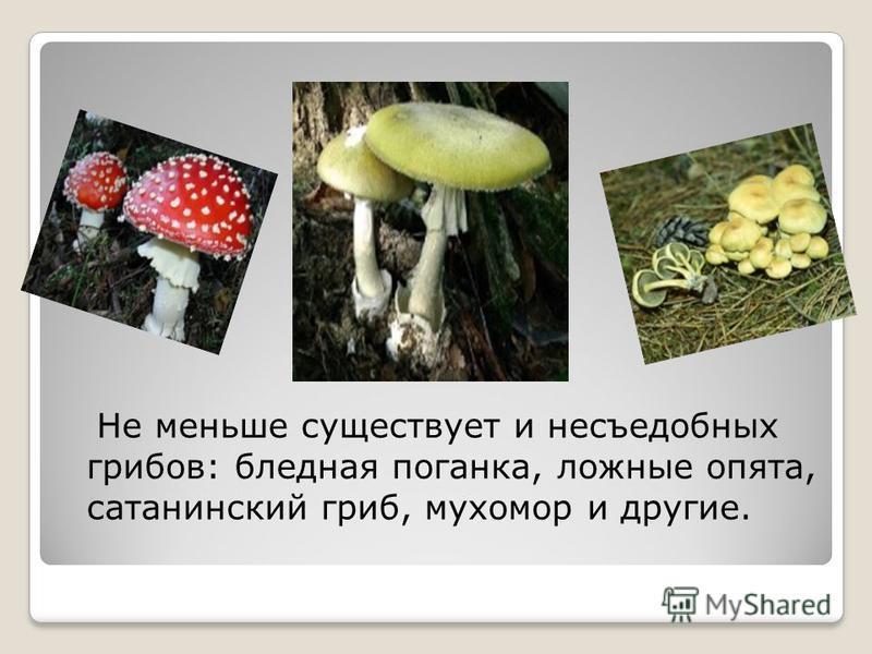 Не меньше существует и несъедобных грибов: бледная поганка, ложные опята, сатанинский гриб, мухомор и другие.
