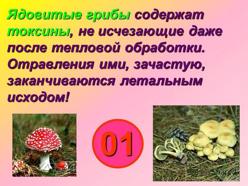 Ядовитые грибы содержат токсины, не исчезающие даже после тепловой обработки. Отравления ими, зачастую, заканчиваются летальным исходом! 01
