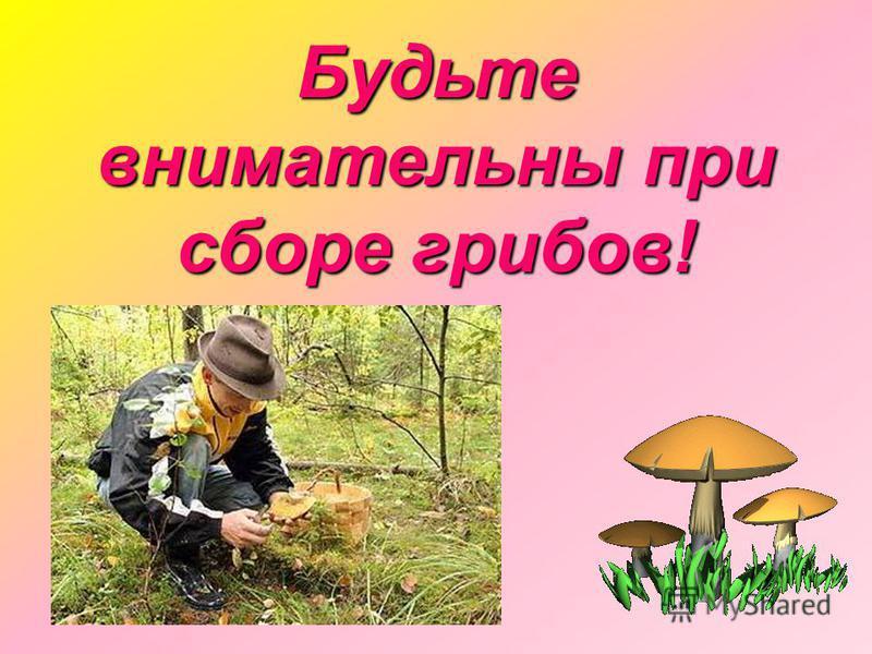 Будьте внимательны при сборе грибов!