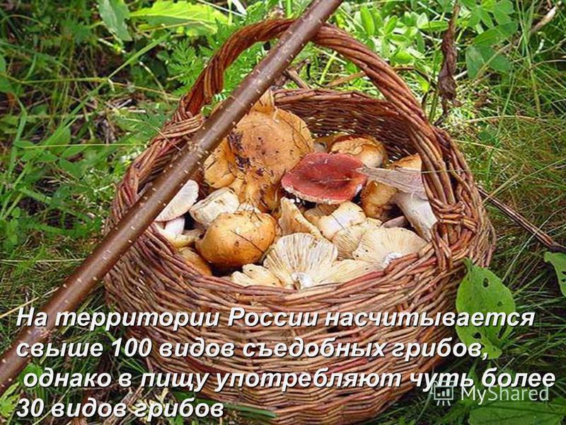 На территории России насчитывается свыше 100 видов съедобных грибов, однако в пищу употребляют чуть более 30 видов грибов однако в пищу употребляют чуть более 30 видов грибов