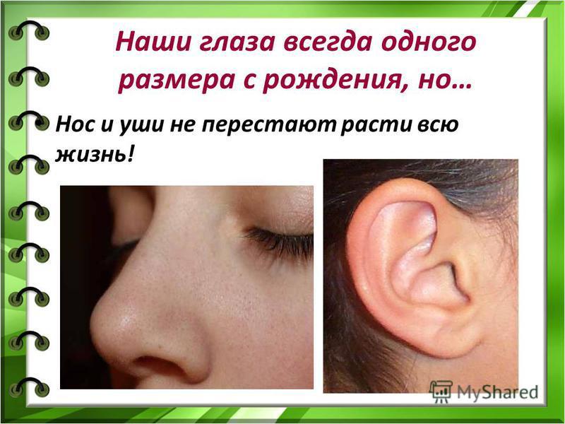Наши глаза всегда одного размера с рождения, но… Нос и уши не перестают расти всю жизнь!