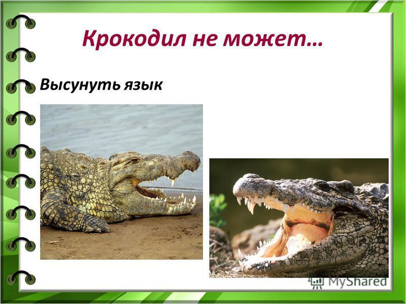 Крокодил не может… Высунуть язык