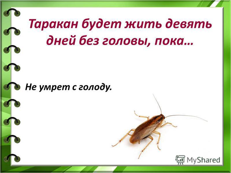 Таракан будет жить девять дней без головы, пока… Не умрет с голоду.
