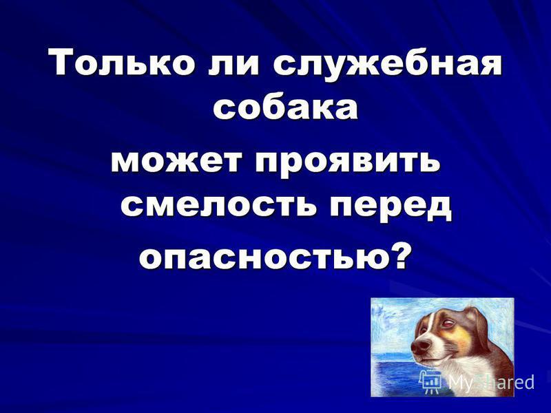 Только ли служебная собака может проявить смелость перед опасностью?