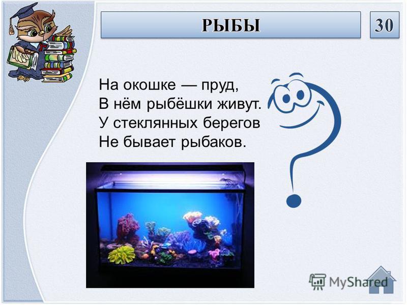 На окошке пруд, В нём рыбёшки живут. У стеклянных берегов Не бывает рыбаков.