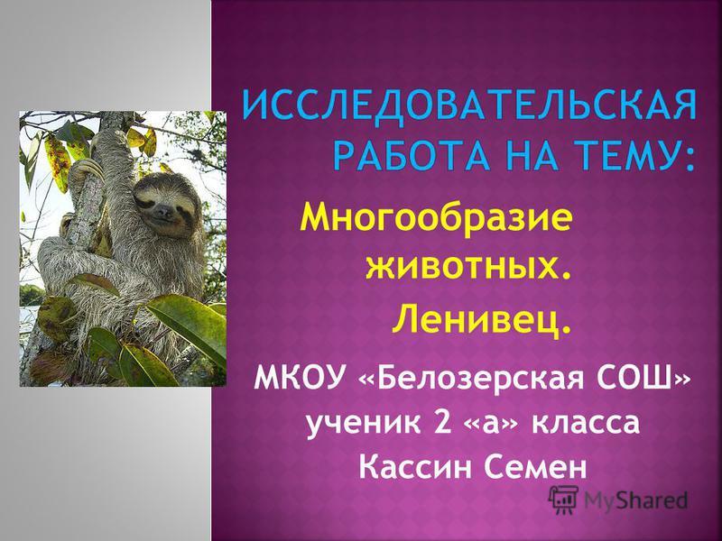 Многообразие животных. Ленивец. МКОУ «Белозерская СОШ» ученик 2 «а» класса Кассин Семен