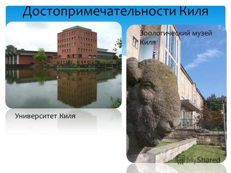 Достопримечательности Киля Университет Киля Зоологический музей Киля