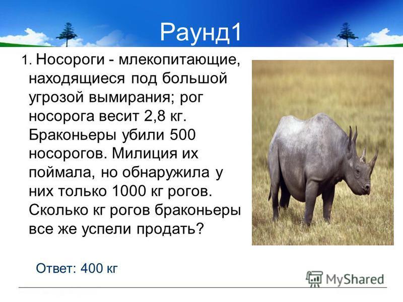 Раунд 1 1. Носороги - млекопитающие, находящиеся под большой угрозой вымирания; рог носорога весит 2,8 кг. Браконьеры убили 500 носорогов. Милиция их поймала, но обнаружила у них только 1000 кг рогов. Сколько кг рогов браконьеры все же успели продать