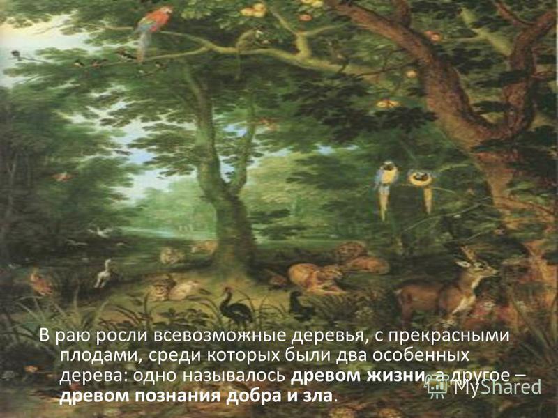 В раю росли всевозможные деревья, с прекрасными плодами, среди которых были два особенных дерева: одно называлось древом жизни, а другое – древом познания добра и зла.