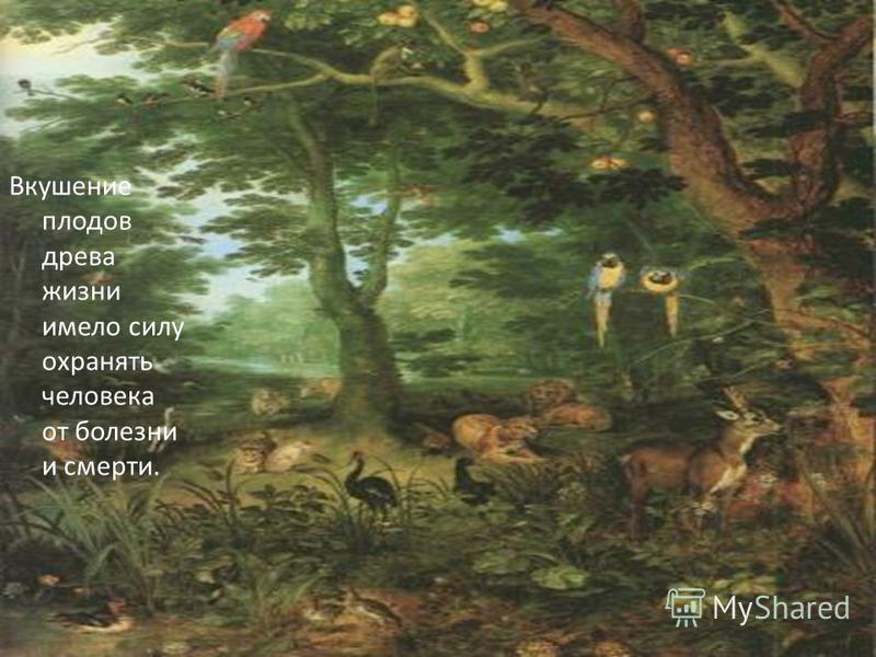 Вкушение плодов древа жизни имело силу охранять человека от болезни и смерти.