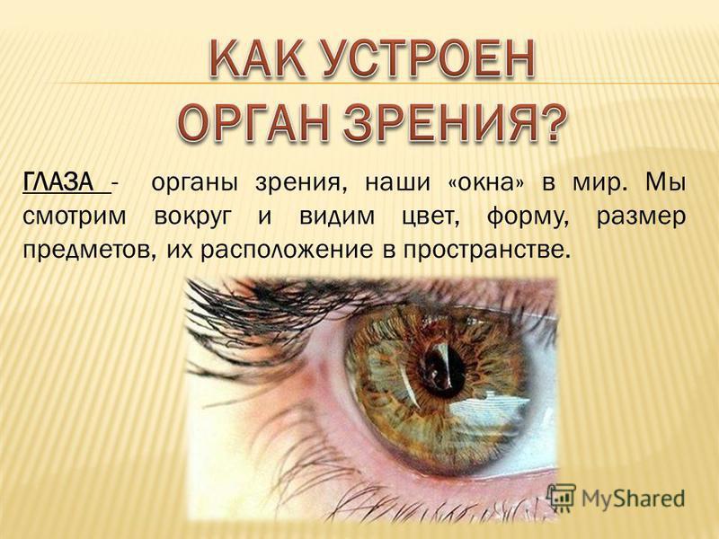 ГЛАЗА - органы зрения, наши «окна» в мир. Мы смотрим вокруг и видим цвет, форму, размер предметов, их расположение в пространстве.