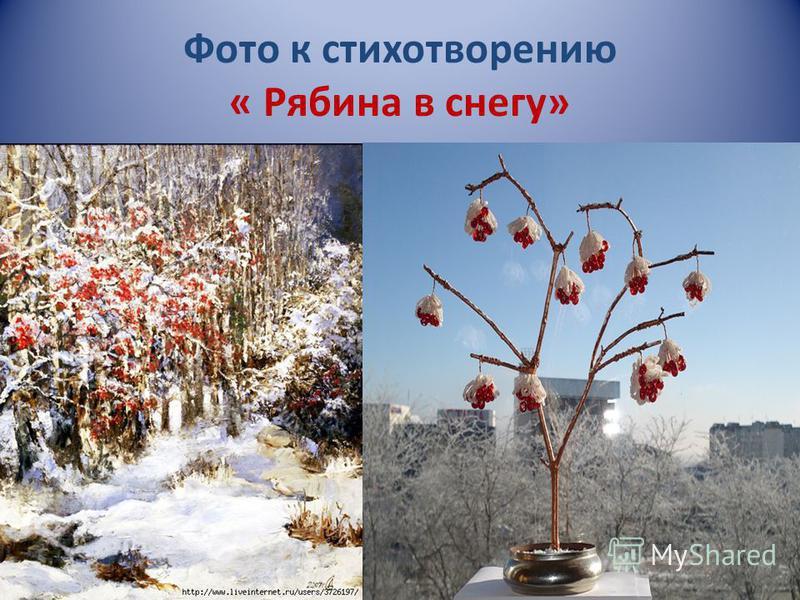 Фото к стихотворению « Рябина в снегу»