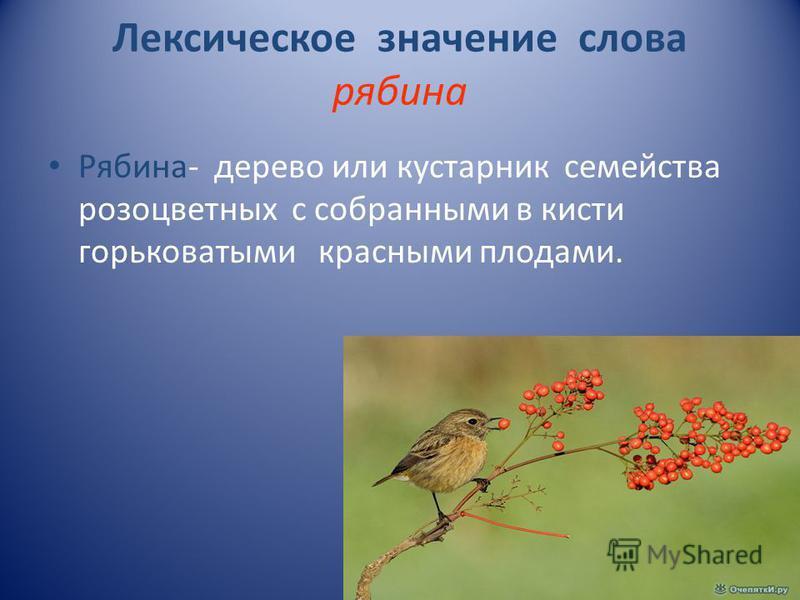 Лексическое значение слова рябина Рябина- дерево или кустарник семейства розоцветных с собранными в кисти горьковатыми красными плодами.