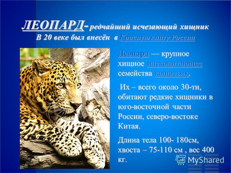 ЛЕОПАРД- редчайший исчезающий хищник В 20 веке был внесён в Красную книгу России Красную книгу России Красную книгу России Леопард Леопард крупное хищное млекопитающее семейства кошачьих. млекопитающее кошачьих Леопардмлекопитающее кошачьих Их – всег