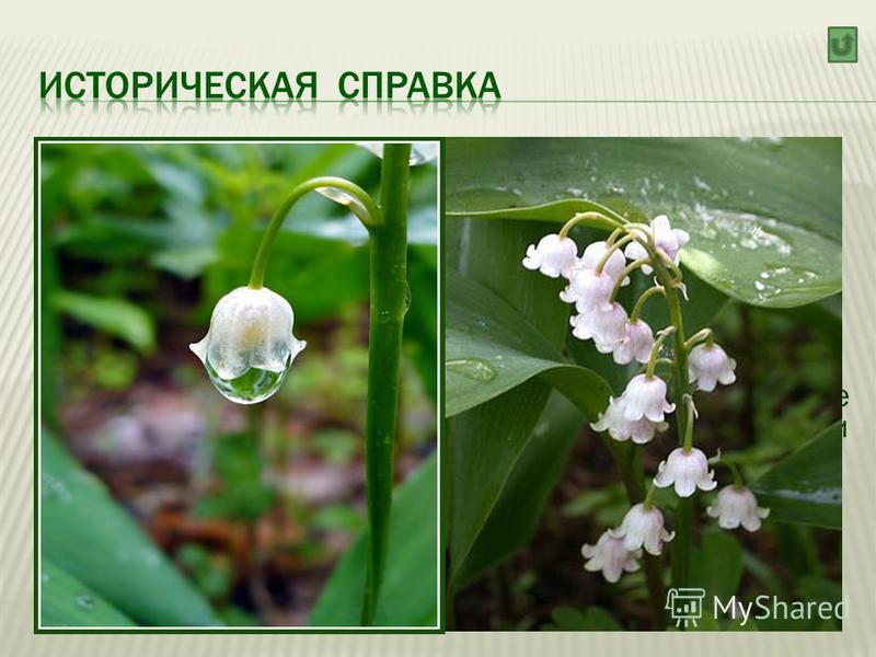 Ландыш (лат. Convallária) род травянистых цветковых растений семейства Лилейных, распространённых в регионах с умеренным климатом Северного полушария. Единственный вид Ландыш майский (Convallária majális )