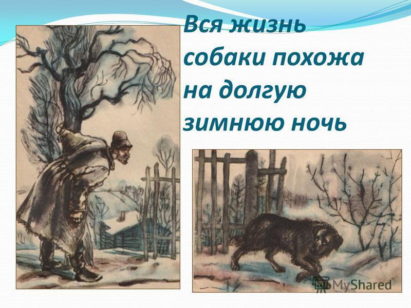 Вся жизнь собаки похожа на долгую зимнюю ночь