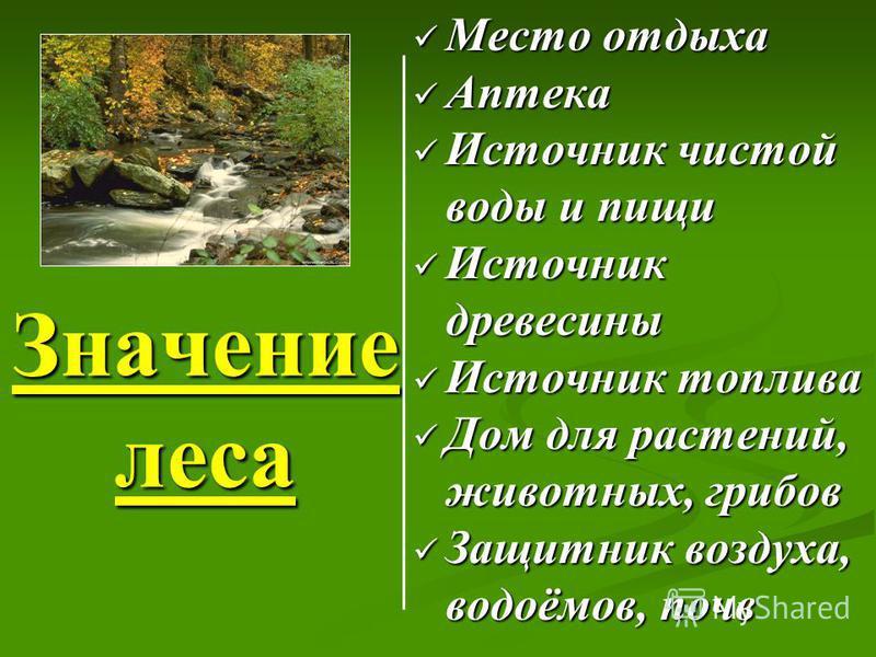 Значение леса Место отдыха Аптека Источник чистой воды и пищи Источник древесины Источник топлива Дом для растений, животных, грибов Защитник воздуха, водоёмов, почв