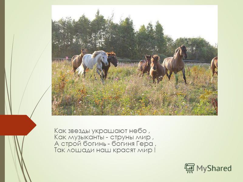 Как звезды украшают небо, Как музыканты - струны мир, А строй богинь - богиня Гера, Так лошади наш красят мир !
