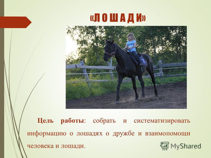 Цель работы: собрать и систематизировать информацию о лошадях о дружбе и взаимопомощи человека и лошади. «Л О Ш А Д И»