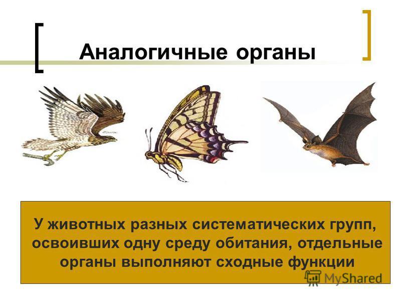 Аналогичные органы У животных разных систематических групп, освоивших одну среду обитания, отдельные органы выполняют сходные функции