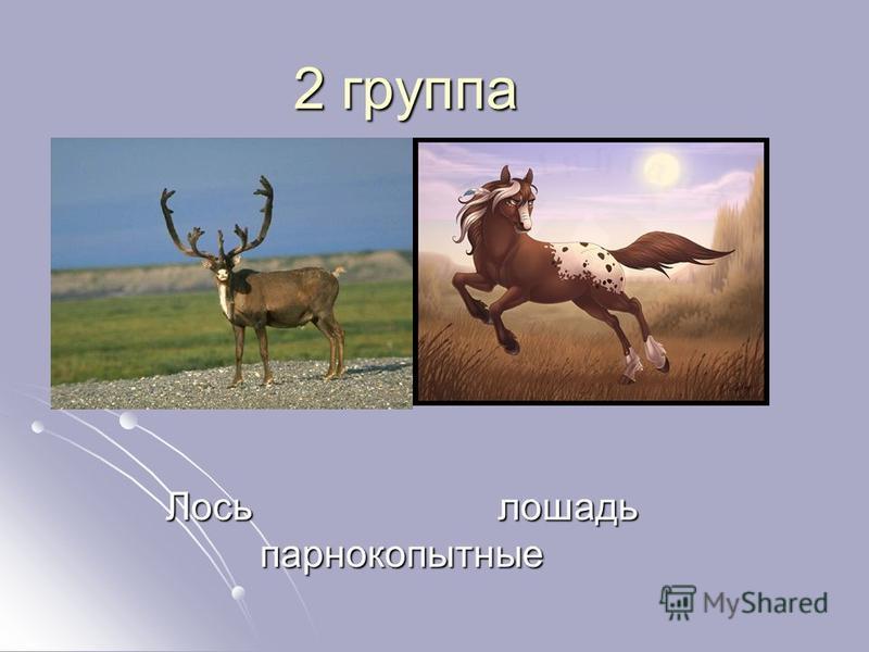 2 группа Лось лошадь парнокопытные