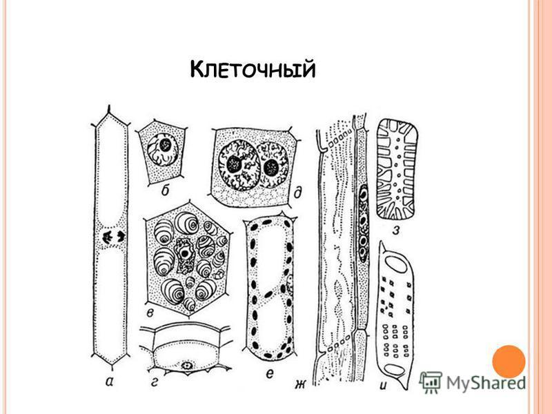 К ЛЕТОЧНЫЙ
