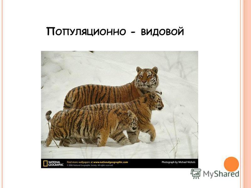 П ОПУЛЯЦИОННО - ВИДОВОЙ