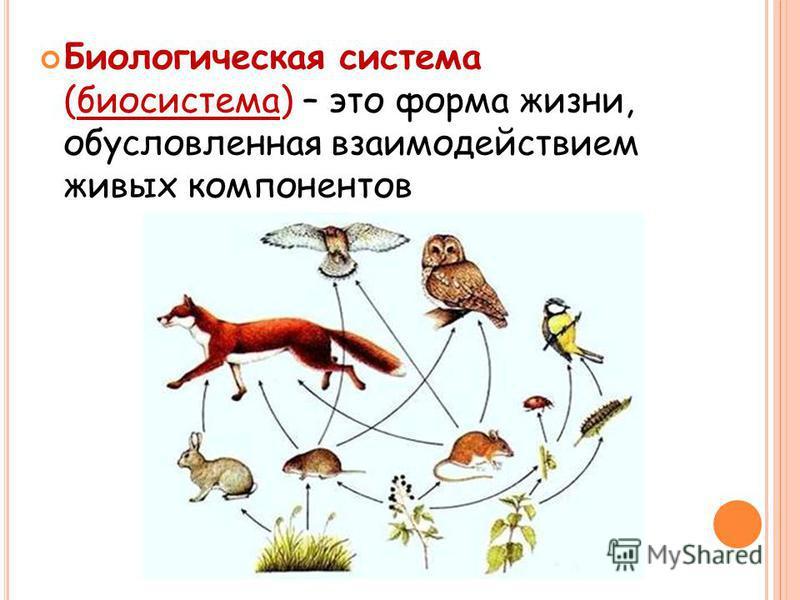 Биологическая система (биосистема) – это форма жизни, обусловленная взаимодействием живых компонентов