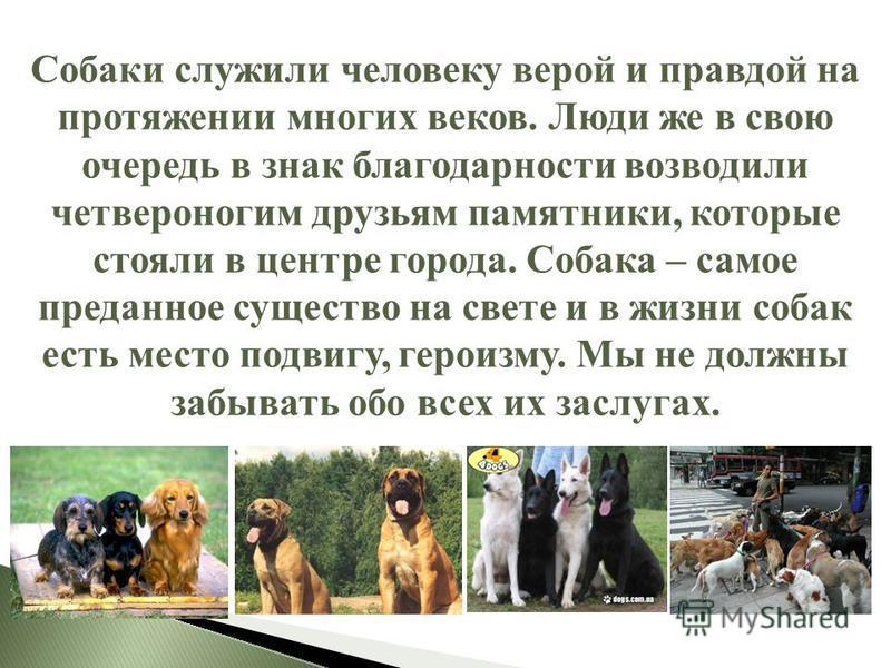 Собаки служили человеку верой и правдой на протяжении многих веков. Люди же в свою очередь в знак благодарности возводили четвероногим друзьям памятники, которые стояли в центре города. Собака – самое преданное существо на свете и в жизни собак есть