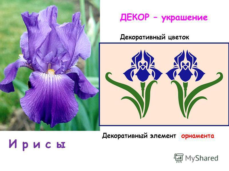 И р и с ы Декоративный элемент орнамента ДЕКОР – украшение Декоративный цветок