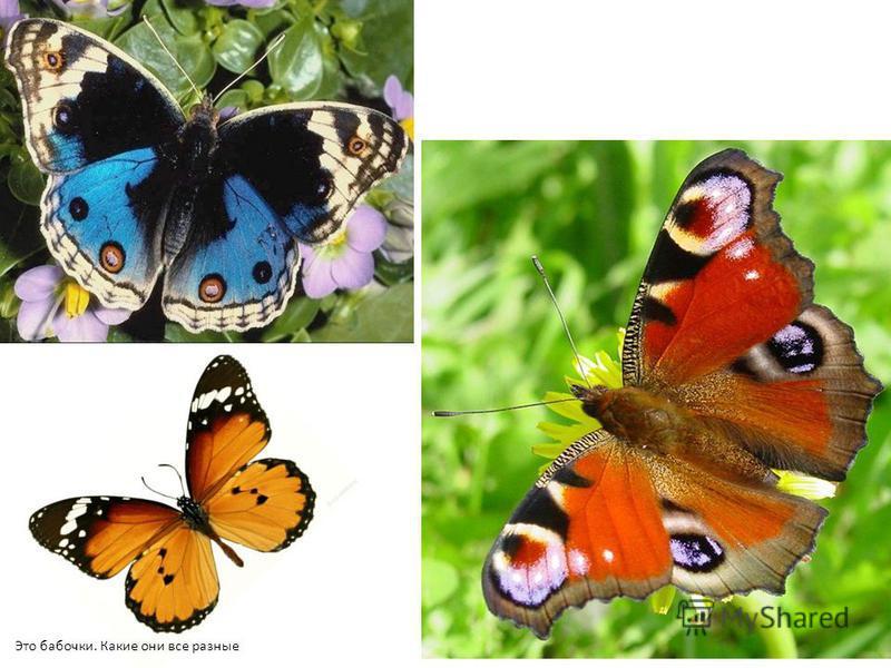 Это бабочки. Какие они все разные