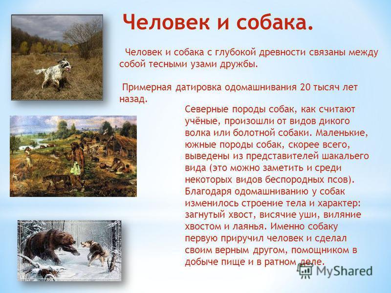 Человек и собака. Человек и собака с глубокой древности связаны между собой тесными узами дружбы. Примерная датировка одомашнивания 20 тысяч лет назад. Северные породы собак, как считают учёные, произошли от видов дикого волка или болотной собаки. Ма