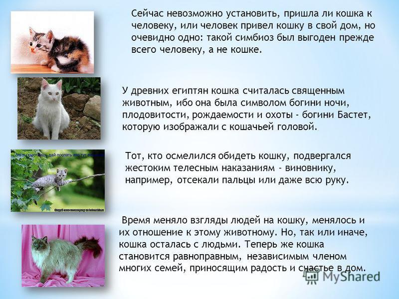 Сейчас невозможно установить, пришла ли кошка к человеку, или человек привел кошку в свой дом, но очевидно одно: такой симбиоз был выгоден прежде всего человеку, а не кошке. У древних египтян кошка считалась священным животным, ибо она была символом