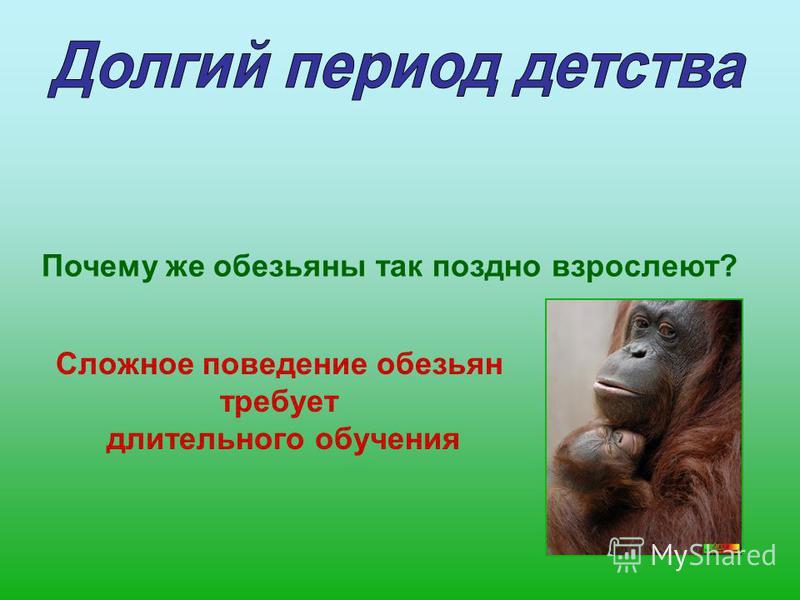 Почему же обезьяны так поздно взрослеют? Сложное поведение обезьян требует длительного обучения