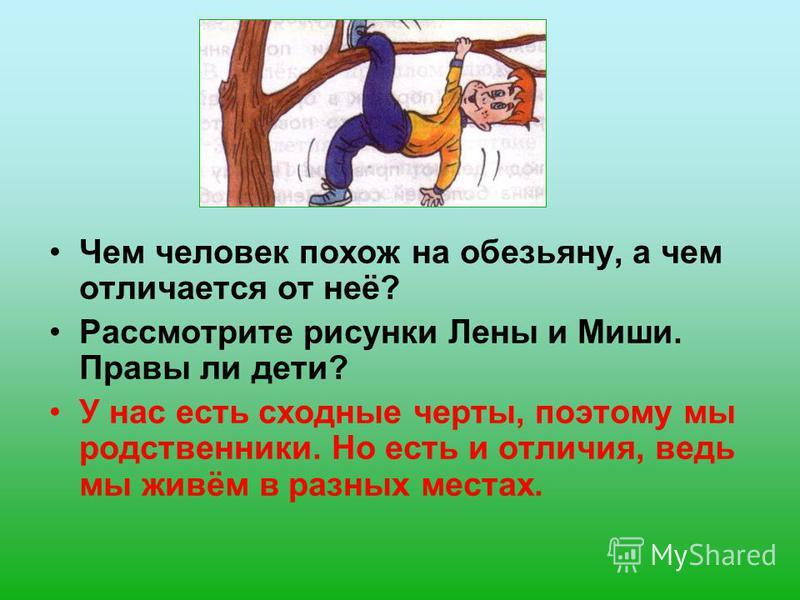 Чем человек похож на обезьяну, а чем отличается от неё? Рассмотрите рисунки Лены и Миши. Правы ли дети? У нас есть сходные черты, поэтому мы родственники. Но есть и отличия, ведь мы живём в разных местах.