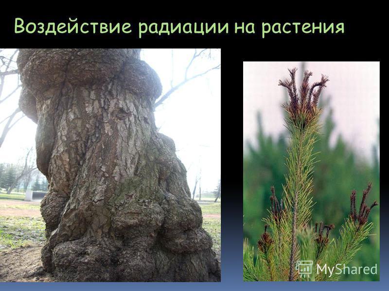 Воздействие радиации на растения
