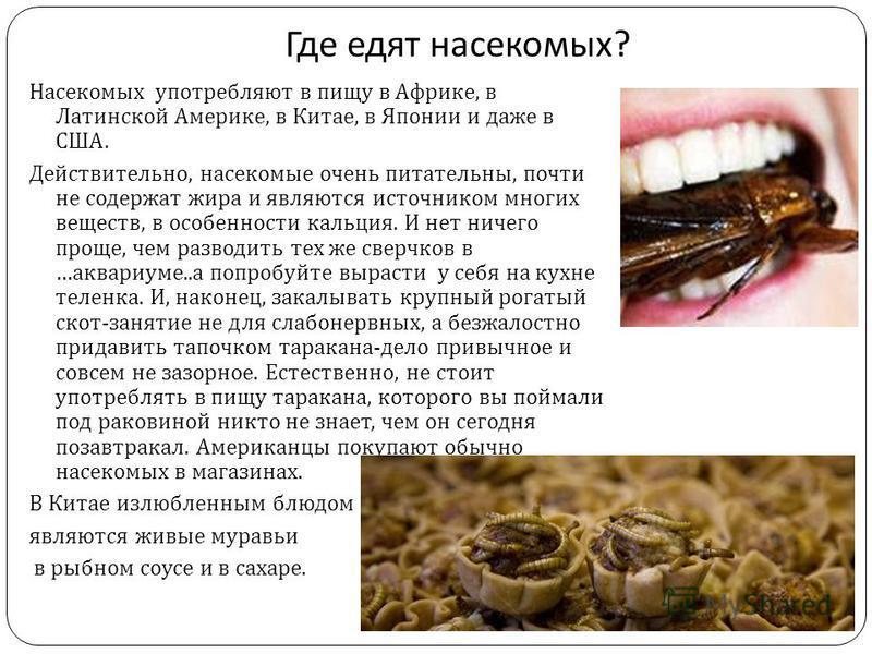 Где едят насекомых ? Насекомых употребляют в пищу в Африке, в Латинской Америке, в Китае, в Японии и даже в США. Действительно, насекомые очень питательны, почти не содержат жира и являются источником многих веществ, в особенности кальция. И нет ниче
