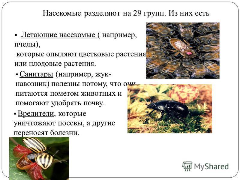 Насекомые разделяют на 29 групп. Из них есть Летающие насекомые ( например, пчелы), которые опыляют цветковые растения или плодовые растения. Санитары (например, жук- навозник) полезны потому, что они питаются пометом животных и помогают удобрять поч