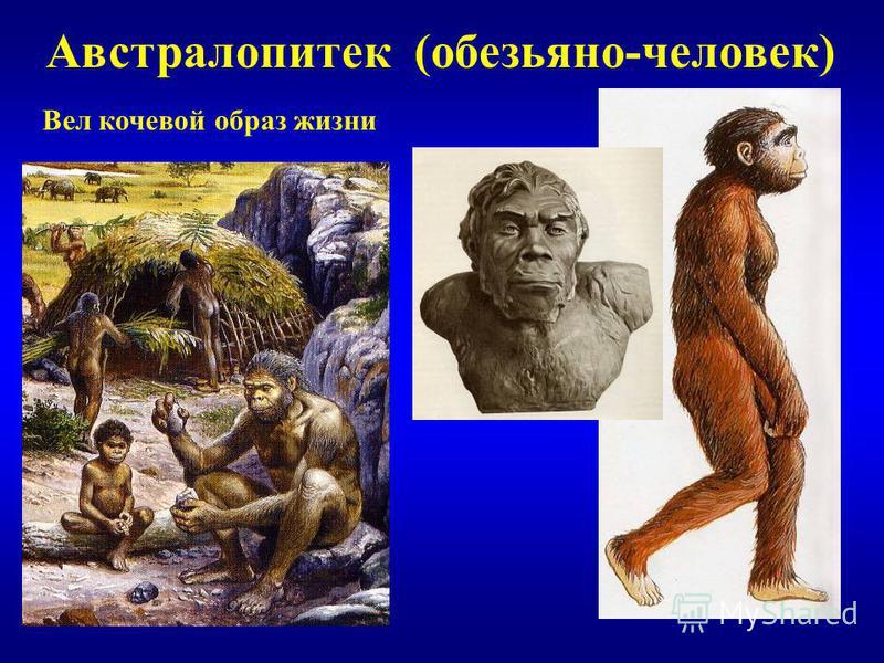 Австралопитек (обезьяно-человек) Вел кочевой образ жизни