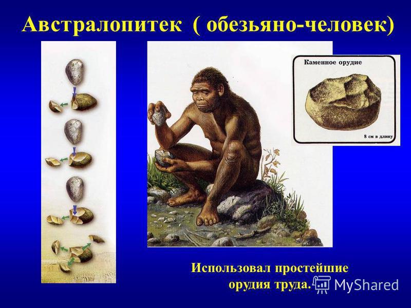 Австралопитек ( обезьяно-человек) Использовал простейшие орудия труда.